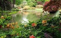 dream yard, beauti garden, dreami landscap, natur beauti, pond plant, random stuff, outdoor beauti