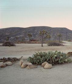 Images Id  Joshua Tree