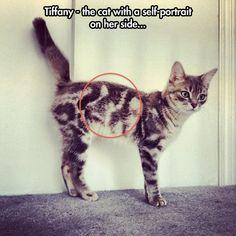 Inception kitten…