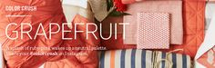 Grapefruit | west elm