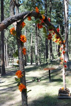 DIY Wedding arch- Perfect touch to our outdoor wedding in Custer State Park. Used wood from fallen trees in the black hills forest!
