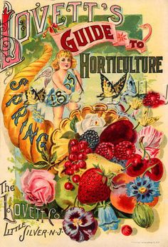 http://wordplay.hubpages.com/hub/vintage-flowers
