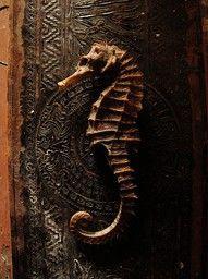 dried seahorse.