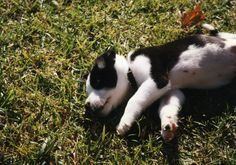 Tipper when he was a wee one...
