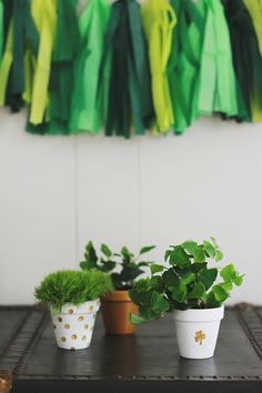 St. Patricks Day Clay Pot Planters = LOVE these!  #gardening