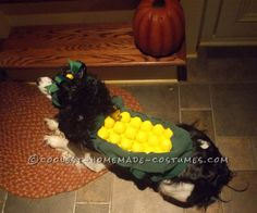 Sweet Cob of Corn Costume for a Dog... This website is the Pinterest of costumes