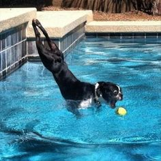 35 Perfectly Timed Pictures