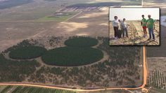 On February 27, 1992, Walt Disney World cast members planted more than 50,000 pine trees across 50 acres to form the largest hidden mickey in honor if Walt Disney World's 20th Anniversary. It is called Mickey forest.