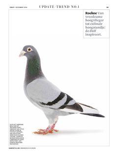 Trend Pigeons