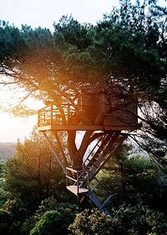stun tree, dreams, sunset, tree houses, treehous, dream hous, trees, the great outdoors, place