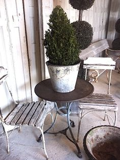 French Country Topiary