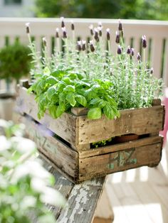 Herb garden...you can plant herbs in almost anything.
