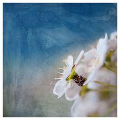 Tiny bug PhotoWhite flower Little Bug Hidden by BitsofLifeImages, $30.00