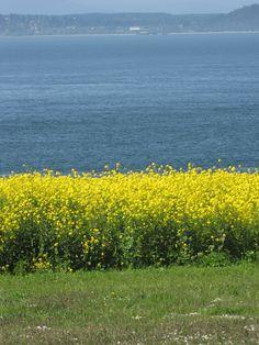 Whidbey Island.