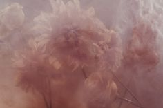 """An utterly exquisite photo from Nicholas Alan Cope + Dustin Edward Arnold's staggering """"Stamen"""" collection of floral photographs dawn, floral photography, art photographi, dreamy photography, nichola alan, beauty, alan cope, blog, flower"""