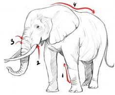 how to draw a realistic elephant step 1