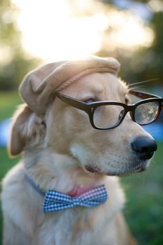 wedding parties, hipster, dogs, smarty pants, golden retrievers, bow ties, pet, puppi, hat
