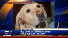 A dogs loyalty never ceases to amaze me.