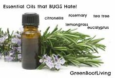 Essential Oils that Mosquitos Hate!