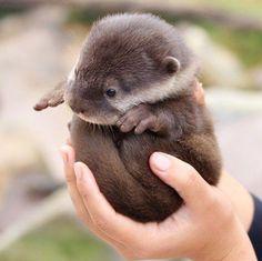 Well look at that littler otter ball!