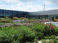 Rooftop Garden at the Gary Comer Youth Center in Chicago. Roy Diblik incorporated perennials into the rooftop vegetable garden. Photo by Roy Diblik, co-owner of Northwind Perennial Farm in Burlington, WI.