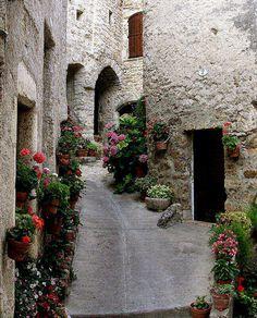 Flower street - Saint-Guilhem-le-Desert, Languedoc-Roussillon