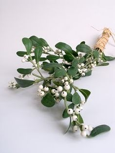 Mistletoe... The Golden Bough.