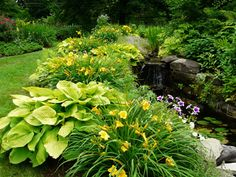 Daylilies and hosta combinations
