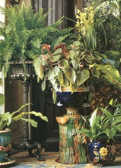 . Amazing container garden; just amazing potted garden, angel wings, potted plants, plant stands, garden seats, gardens, homes, indoor house plants, sunroom
