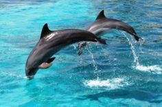 Meet the playful bottlenose dolphins of Monkey Mia in Western Australia