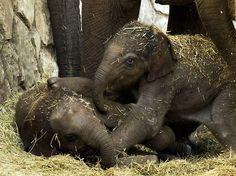 The Daily Cute: Elephant-itis...the Good Kind!