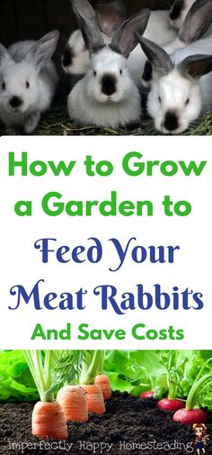 How to Grow a Garden