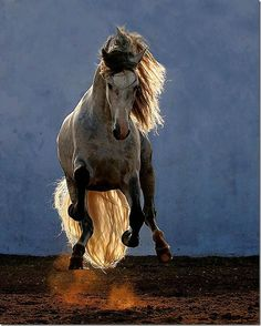 Roan pony run