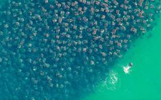 just a school of stingrays... wow.