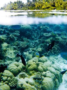 split view of coral reef in the Maldives