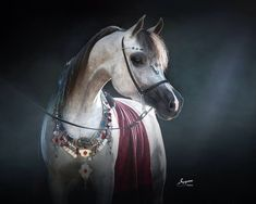 Custom design   By Arabian Fancy Tack. AVAILABLE  Suzanne Sturgill photo