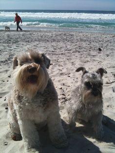 Happy beach doggies!