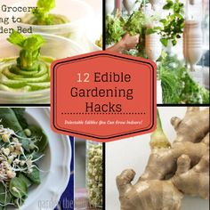 12 Edible Gardening Hacks  - Creative Gardeners share how they grow food indoors in unique ways!