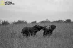 baby elephants (: