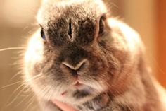 The Ultimate in Bunny Disapproval - January 4, 2012