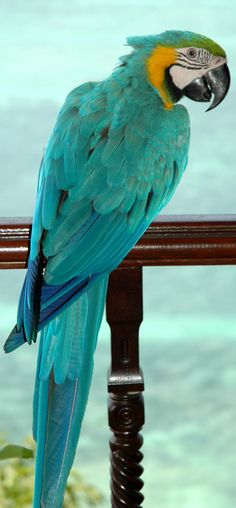 Parrot in my favorite color. Beautiful!!