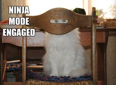 hehe...ninja kitty