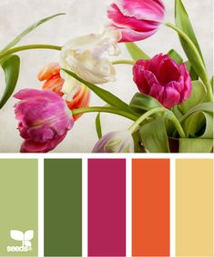 tulip color  Color Palette - Paint Inspiration- Paint Colors- Paint Palette- Color- Design Inspiration