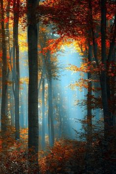 """""""A dark little glen floored with moss and dark, slippery stones. The autumn leaves were piled in yellow drifts, still clinging to branches in places, bright little flags of color. Slanted bars of sunlight fell through the branches."""" ~Rosewood http://www.amazon.com/Rosewood-Walker-Lauren-Gilley-ebook/dp/B00HBSIFNI/ref=la_B009DHNKXU_1_8?s=books&ie=UTF8&qid=1387148533&sr=1-8"""