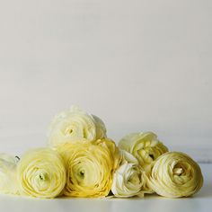 Pale lemon ranunculus