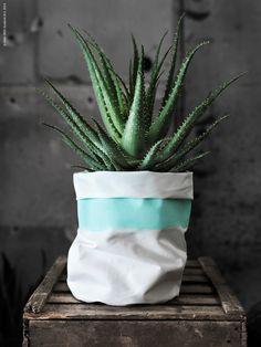 #pflanze #plants #wohnen #living #pflanzenfreude #planters