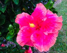 A #Hawaii hibiscus to help brighten a long winter evening. #gohawaii #MyHometownPins