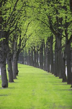 paths, pathway, tree, color, green, beauty, road, place, walk