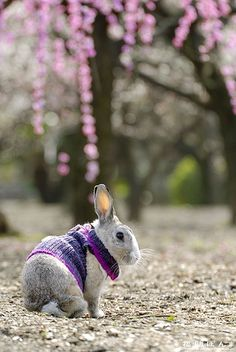 .A bunny in a sweater...a purple sweater!