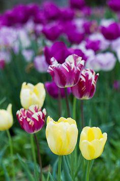 Spring in the Arboretum - 2012 #JMU #Arboretum #EJCArboretum
